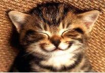 แมว ยิ้ม